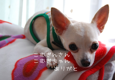 03_20090711195726.jpg