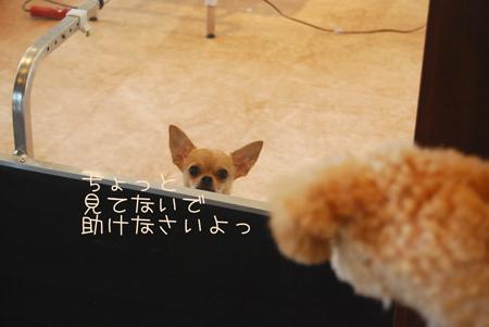 03_20090812151143.jpg