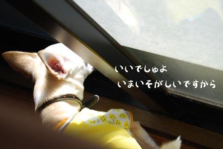 04_20090125133817.jpg