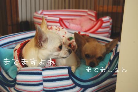 05_20090521210717.jpg