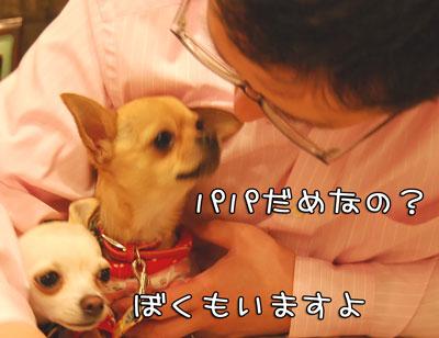 06_20090401212935.jpg