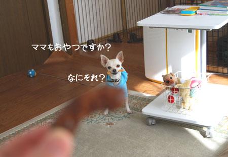08_20090108150423.jpg