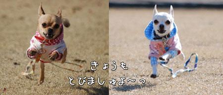 09_20090202170244.jpg