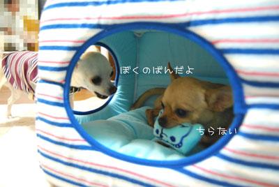 09_20090513204614.jpg