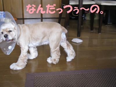 004_20080912004716.jpg