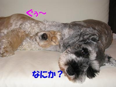 006_20081001213831.jpg