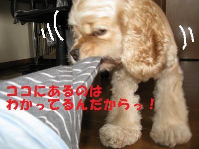 010_20080829003702.jpg