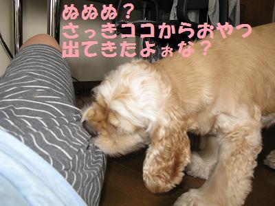 012_20080829003255.jpg