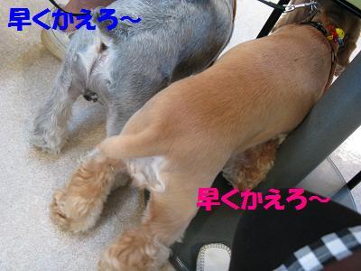 014_20080918002205.jpg