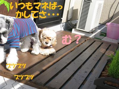 015_20081010021558.jpg