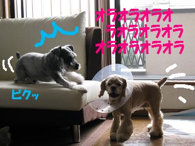 024_20080912004924.jpg