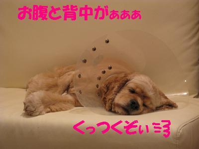 033_20080912005014.jpg