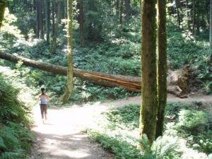 落ちている木