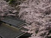 090407-asukayama.jpg
