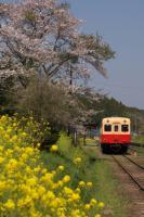 090411-kominato-tsikisaki-3.jpg