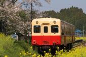090411-kominato-tsukisaki-1.jpg