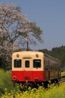 090411-kominato-tsukisaki-4.jpg
