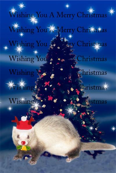 多夢クリスマスカード