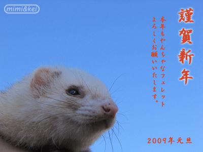 多夢2009謹賀新年