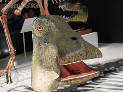 恐竜ニジェールサウルス1