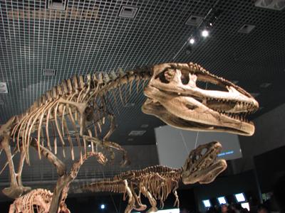 恐竜マプサウルス