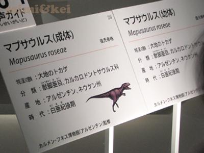 恐竜マプサウルス2