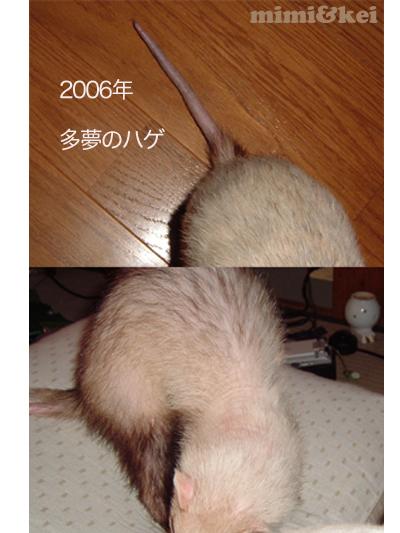 多夢のハゲ2006