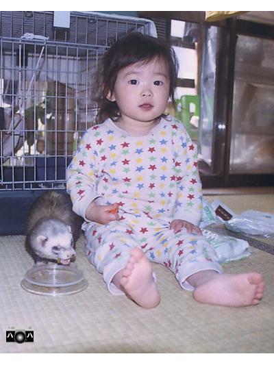 動物2匹3