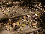 秋の山道。。。
