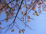 空と枯れ枝のコラボ