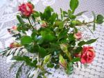 我家のバラ