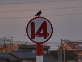 12urawa36