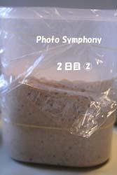 酵母2_2