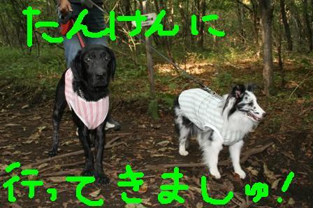 IMG_0402_20080915164815.jpg