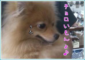pvvPb689.jpg