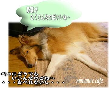 inuat_20080429175016.jpg