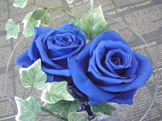 青いバラ③