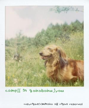 camp6.jpg