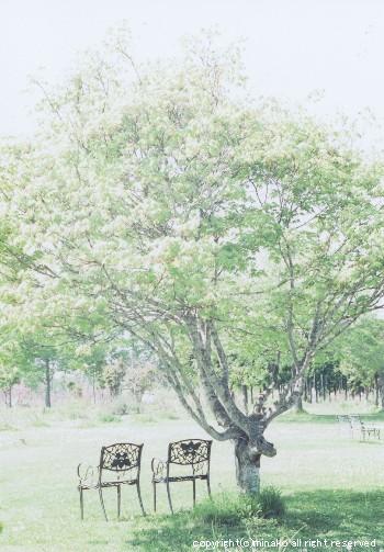 shichiku2.jpg