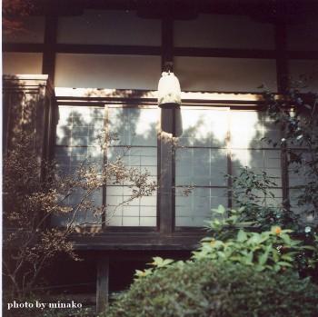 yashica8.jpg