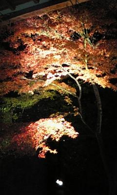 京都20081128-30 033