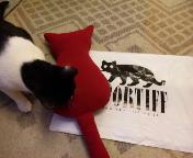 スポーティフの猫クッション点検中