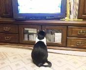 テレビを見るころたん