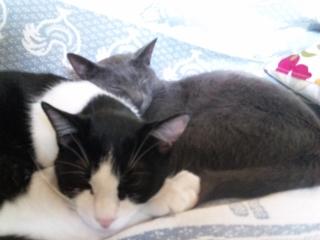 20090412 昼寝atお兄ちゃんのソファ