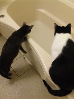 お風呂大好き!
