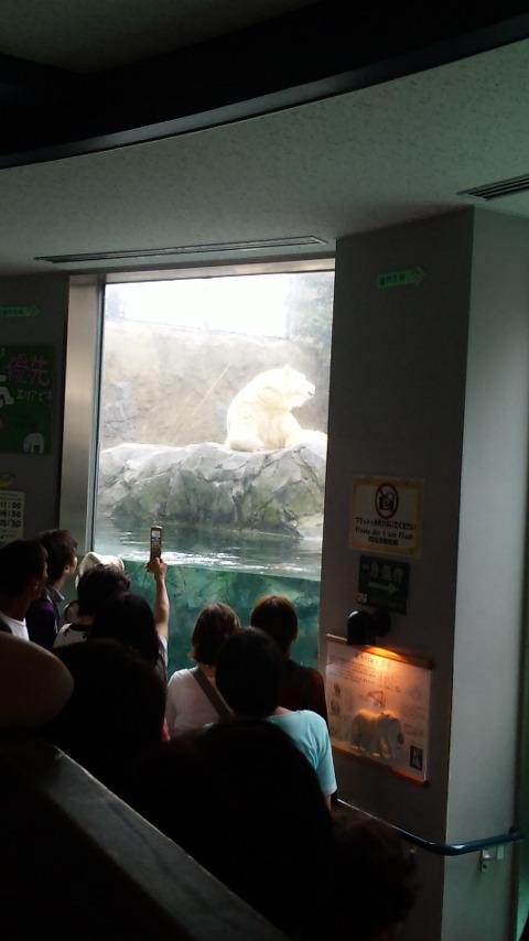 旭山動物園 6