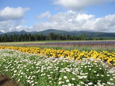 丘の花畑縮小