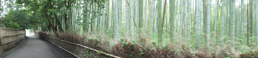 20100620_05_bamboo.jpg
