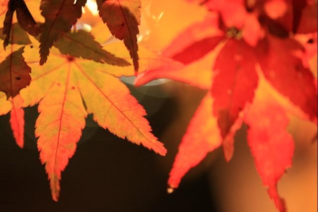 20101103_01_yoshida.jpg