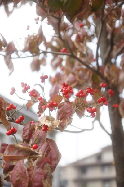20101107_01_sanjyo.jpg